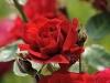 kvetiny1
