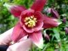 kvetiny11