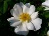 kvetiny13