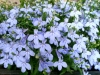 kvetiny14