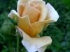 kvetiny15