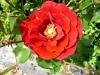 kvetiny16
