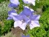 kvetiny18