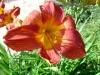 kvetiny2