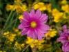kvetiny23