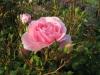 kvetiny26