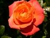 kvetiny28