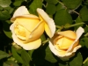 kvetiny29