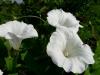 kvetiny3