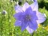 kvetiny4