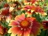 kvetiny5