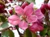 kvetiny7