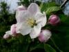 kvetiny9