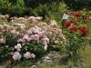 zahrada13