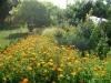 zahrada17
