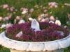 zahrada34
