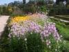 zahrada9
