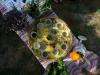 zahradni-slavnost35