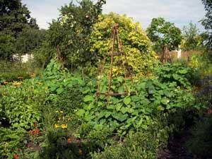 aromaticka-zahrada