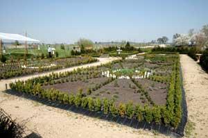 formalni-zahrada-na-jare